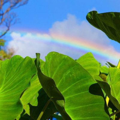 Chasing #rainbows this #alohafriday #weekendvibes #friyay