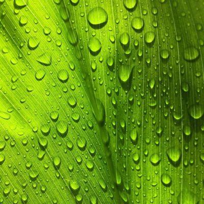 Enjoying the little delights of #rainydays this #alohafriday #happyweekend!